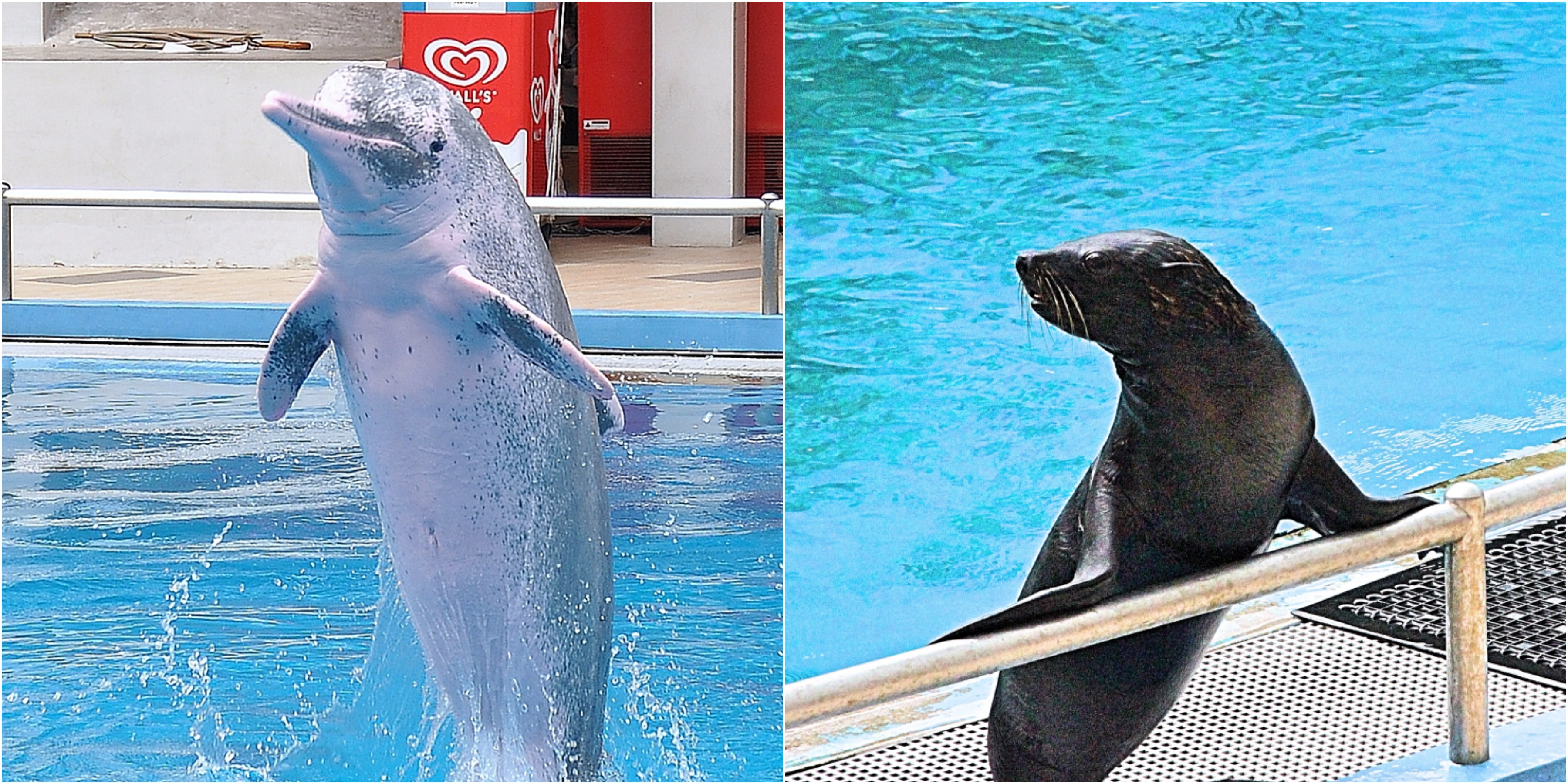 Seal Dolphin Show Singapore